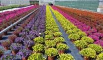 """CORONAVIRUS/ Danni pari al 100% della produzione al settore florovivaistico, Coldiretti """"bisogna chiedere lo stato di calamità"""""""