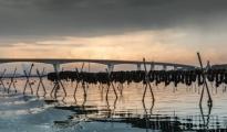 EMERGENZE/ I settori della pesca e della mitilicoltura tra i più colpiti dagli effetti del Covid a Taranto