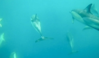 AMBIENTE DA SALVARE/ A Taranto un rifugio protetto per i delfini