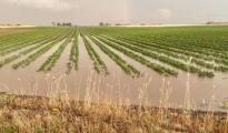 COLDIRETTI TARANTO/Maltempo, sale la conta dei danni per i nubifragi a Taranto e provincia. Grano appena seminato spazzato via da acqua e fango