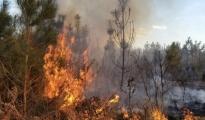 ALLARME INCENDI/ VFF mobilitati nel Tarantino, 40 interventi, in fiamme oltre 30 ettari di vegetazione